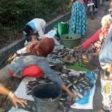 Ikan nila dengan ukuran kecil dijual dengan harga sangat murah (Foto : Warganet / Jatim TIMES)