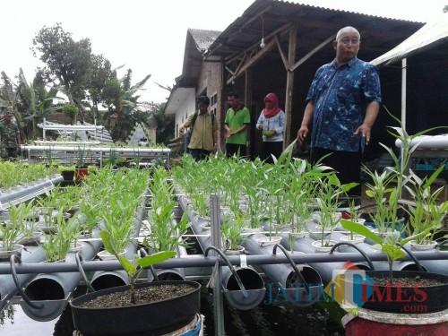 Basiri, pemilik dan penggagas Bengkel Mimpi Kanigoro yang berhasil memasifkan pertanian hidroponik di Kabupaten Malang. (dok MalangTIMES)