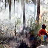 Kebakaran hutan di Hutan Oro-Oro Ombo, lereng Gunung Panderman beberapa saat lalu.