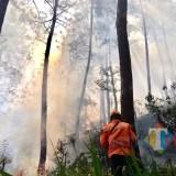 Kebakaran hutan di lereng�Gunung Panderman, Kota Batu beberapa saat lalu.