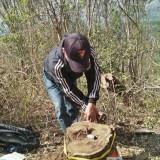 Petugas saat melakukan olah TKP dilokasi pencurian kayu (Foto : Humas Polres Malang for MalangTIMES)