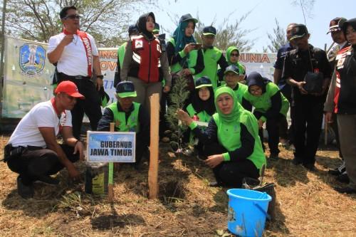 Gubernur Jatim Tanam Cemara Udang, Taha Bencana Tsunami