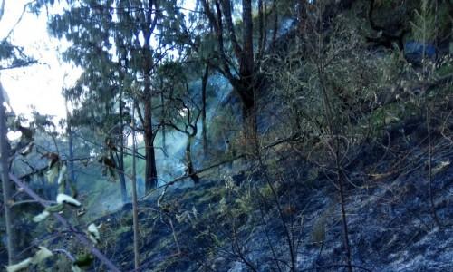 Kondisi kebakaran hutan di Gunung Arjuna yang berhasil padam, Senin (29/7/2019). (Foto: istimewa)