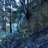 Kebakaran Hutan Gunung Arjuna Padam, Tim Pemadam Tetap Lakukan Pemantauan