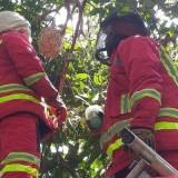 Diganggu Sarang Lebah, Rumah Dimasuki Ular, Lapor Saja Petugas Damkar