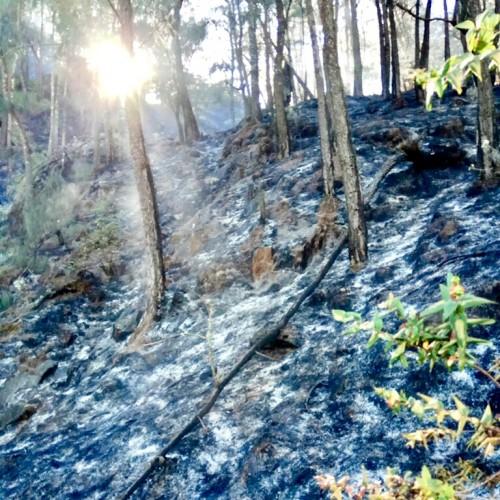 Area lahan yang telah berhasil dipadamkan oleh tim di Gunung Arjuna.