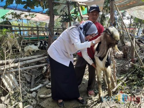 Tim Kesehatan Dinas Pertanian dan Ketahanan Pangan Kota Malang saat melakukan pemeriksaan terhadap hewan ternak. (Arifina Cahyanti Firdausi/MalangTIMES)