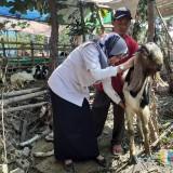 Cegah Penyakit Zoonosis, Hewan Kurban di Kota Malang Diperiksa