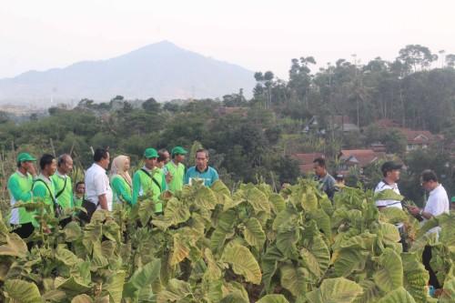 Petani tembakau Kabupaten Blitar saat melihat dan mendapat paparan pengelolaan tembakau varietas lokal Sumedang. (Foto : Aunur Rofiq/BlitarTIMES)