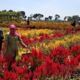 Gubernur Jatim Khofifah Indar Parawansa saat meresmikan Desa Wisata di Kabupaten Kediri. (Eko Arif S /JatimTIMES)