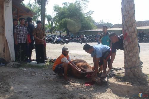 Penyembelihan hewan kurban di kampus 1 Unisba Blitar.(Foto : Aunur Rofiq/BlitarTIMES)