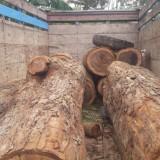 Setahun Sembunyi di Hutan, DPO Ilegal logging Dibekuk