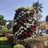 Taman Kota Malang Berhias Bunga Merah Putih