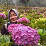 Surga Tersembunyi di Kecamatan Bumiaji, Ada Hamparan Taman Bunga Hortensia