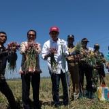 Kepala BI Kediri Musni Hardi bersama Bupati Nganjuk saat memanen bawang merah. (eko Arif s /JatimTimes)