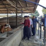 Ikut Tergabung dalam Perumda Tunas, Tim Pansus Ranperda Beberken Pesan Bagi PD RPH Kota Malang