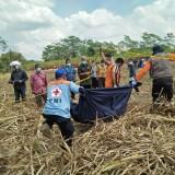 Mayat Laki-laki di Ladang Tebu, Polisi Temukan Bercak Darah