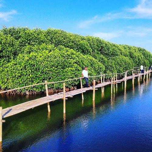 Hutan Mangrove Kulon Progo menjadi alternatif baru wisatawan yang mengunjungi Daerah Istimewa Yogyakarta