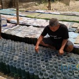Usaha Sampingan Budidaya Ikan Cupang, Polisi Ini Kantongi Jutaan Sebulan