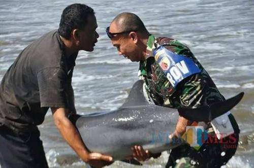 Serda Muchtar saat mencoba mengembalikan ikan lumba-lumba yang terdampar di Pantai Klatak ke perairan lepas dengan masih memakai seragam lengkap (ist)