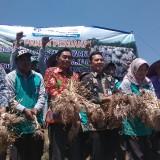Tekan Impor Bawang Putih, Petani Butuh Jaminan Kestabilan Harga