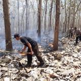 Diduga karena Aktivitas Perburuan Satwa, Area Hutan Produksi Dilalap Api
