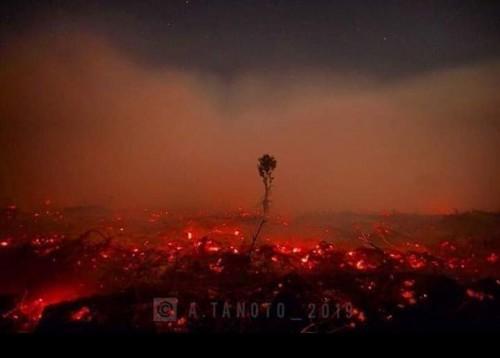 Kebakaran hutan dan lahan Pangkalan Bun, Kalimantan Tengah (@aio_tanoko)
