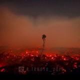 328 Ribu Hektar Lahan Terbakar, Warganet: Hukum Pembakar Hutan