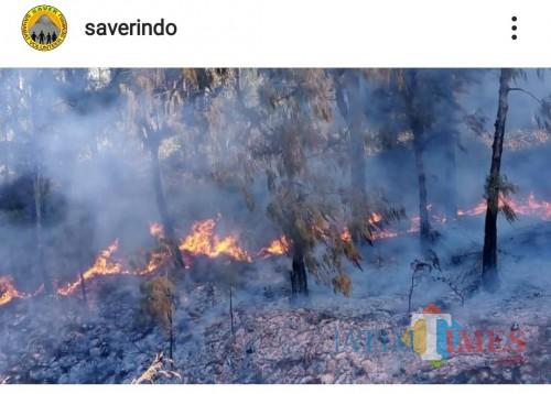 Kebakaran hutan yang terjadi di Gunung Semeru, 17-18 September 2019. (Foto: Saverindo)
