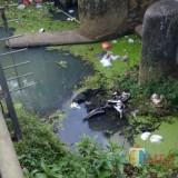 Tragis, Diduga Tidak Ada yang Menolong Saat Kecelakaan, Kakek 74 Tahun Ditemukan Tewas di Sungai