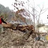 Petugas Kesulitan Jangkau Titik Api Karhutla Gunung Semeru, Belum Pertimbangkan Water Bombing