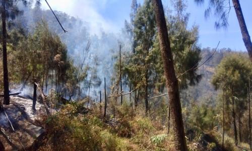 Kebakaran lahan hutan di Gunung Arjuno. (Foto: istimewa)