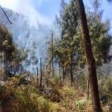 Kobaran Api di Lahan Hutan Gunung Arjuno Padam, Waspada Sisa Bara