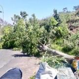 Angin Kencang, Pohon Tumbang Terjadi di Desa Pendem-Torongrejo