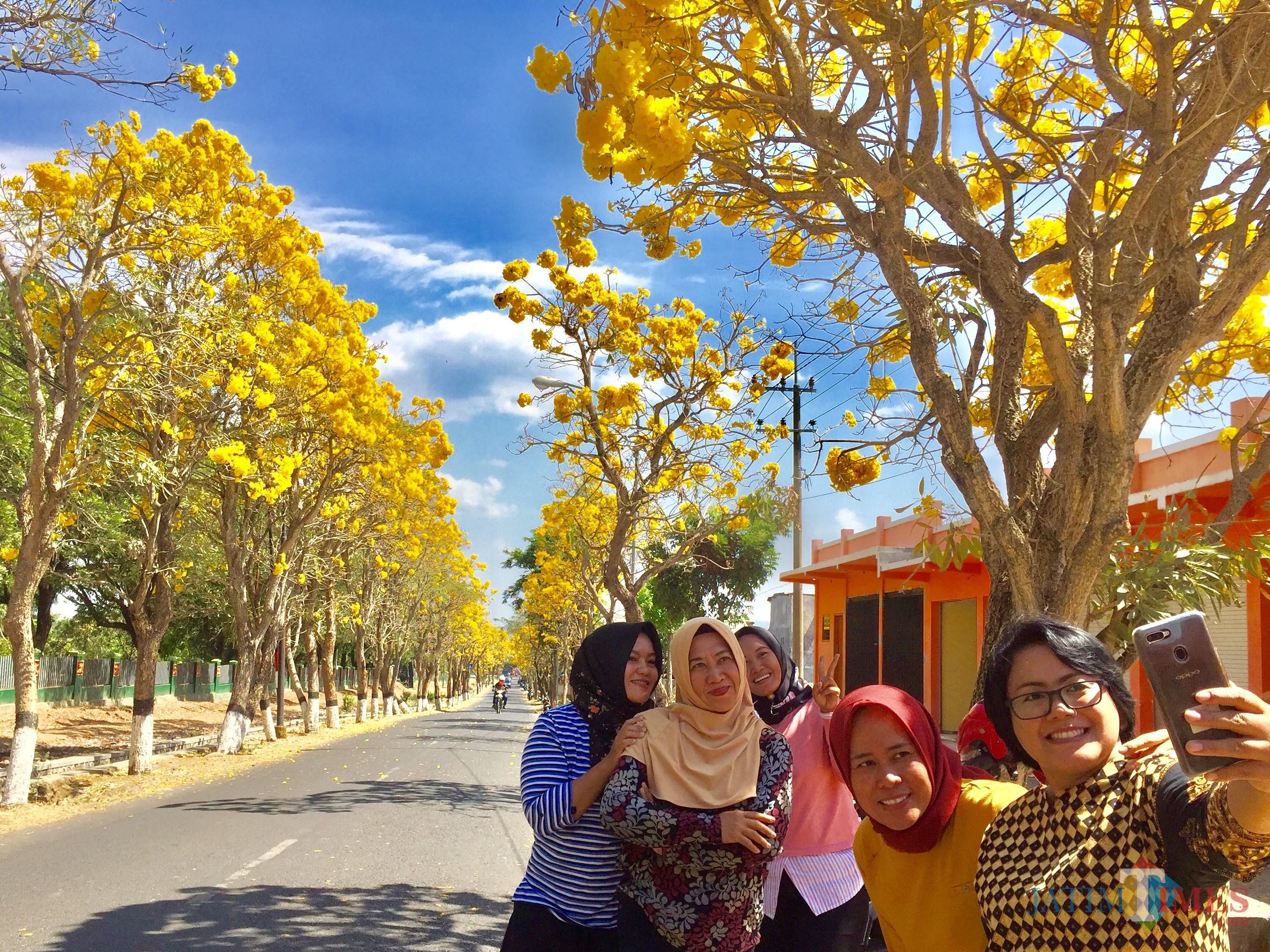 Masyarakat saat mengambil gambar latar belakang pohon tabebuya jalanKsatrian Arhanud, Desa Pendem Kecamatan Junrejo. (Foto: Irsya Richa/MalangTIMES)