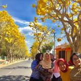 Demi Berswafoto Sakura Ala Desa Pendem, Masyarakat Rela Lakukan ini di Tengah Lalu Lalang Kendaraan