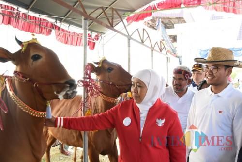 Buka Final Kerapan, Gubernur Khofifah Minta Peserta Hindari Kekerasan terhadap Sapi