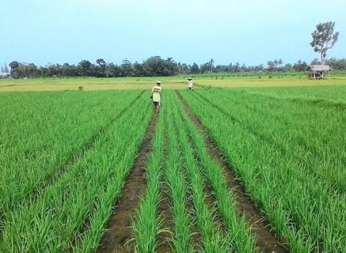 Ilustrasi lahan pertanian di Kota Malang (mitalom.com)