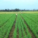 Cegah Alih Fungsi Lahan Pertanian, BP2D Kota Malang Beri Petani Diskon 50 Persen untuk PBB