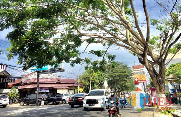 Salah satu pohon rawan saat angin kencang di Jl Diponegoro, Kecamatan Batu. (Foto: Irsya Richa/MalangTIMES)