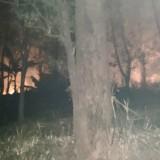 Lalai Saat Buka Lahan, Lahan Hutan Terbakar di Kota Batu