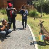 Ratusan Fotografer Berburu Satwa Langka Taman Safari Prigen
