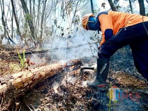 Petugas saat memadam api di petak 219b, Desa Tlekung, Kecamatan Junrejo, Sabtu (12/10/2019).