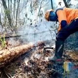 Giliran Petak 219b Desa Tlekung Seluas 5 Hektare Dilalap Si Jago Merah