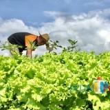 Harga Sering Anjlok dan Petani Merugi, Pemkot Batu Bakal Buat Regulasi Ini