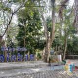 Konsep Hutan Kota seperti Ini yang Diharapkan DLH Kota Malang