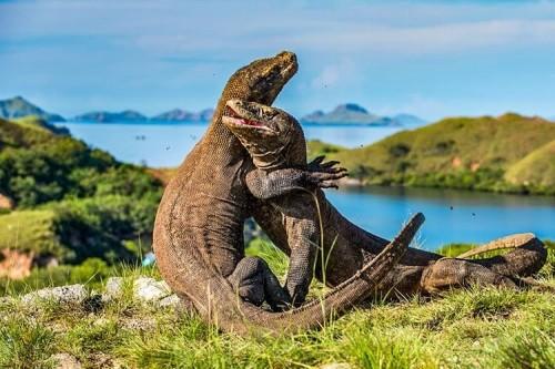 Pulau komodo. (Foto: istimewa)