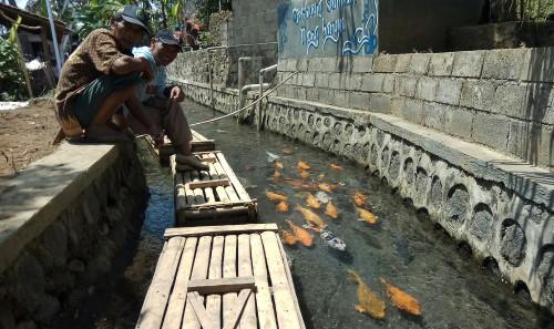 Menikmati Pemandangan Ikan Warna-warni di Parit Berair Jernih