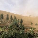 Layaknya Badai Pasir, Kecamatan Bumiaji Diselimuti Angin Kencang Disertai Debu Pekat