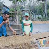 Berbekal Konsistensi, Kakek di Blitar Nikmati Sukses dari Bertani Tembakau